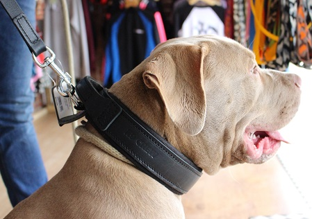 BULLVISION Collar - Leather-0
