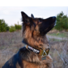 Coyote Tactical Collar-0